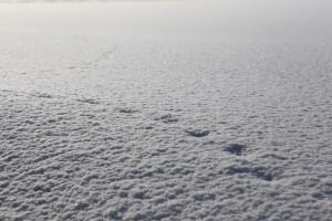 2021年2月下旬 雪の上の誰かの足跡